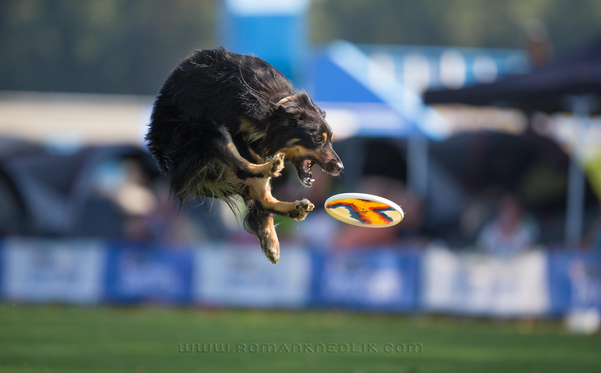 me_dogfrisbee-30
